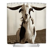 Cabra De Fuerteventura Shower Curtain