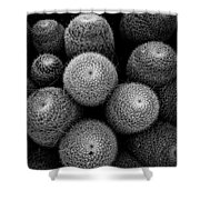 Cactus Black And White 5 Shower Curtain