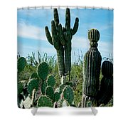 Cactus Twins Have Company Shower Curtain
