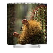 Cactus With Beetle Shower Curtain