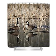 Canada Geese On The Marsh Shower Curtain by Jemmy Archer