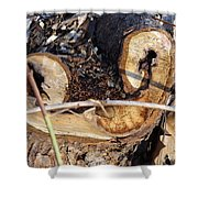Canal Stumps-017 Shower Curtain