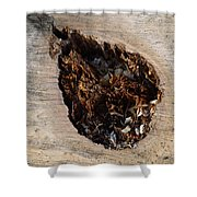 Canal Stumps-018 Shower Curtain