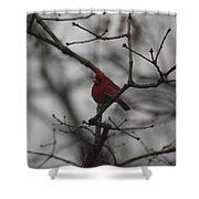 Cardinal On The Limb Shower Curtain