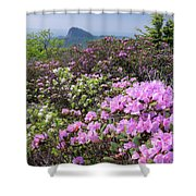 Catawba Rhododendron Table Rock  Shower Curtain