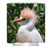 Cattle Egret Profile Shower Curtain