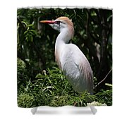 Cattle Egret With Breeding Feathers Shower Curtain