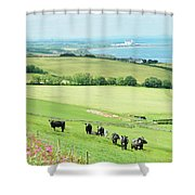 cattle in field and east coast Berwickshire Shower Curtain