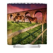 Cefn Viaduct Horses At Sunset Shower Curtain