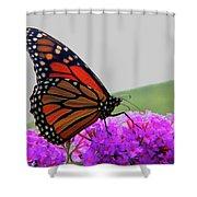 Celebrate Goodness Shower Curtain