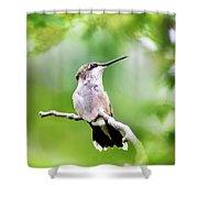 Charming Hummingbird Square Shower Curtain