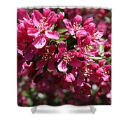 Cherry Blossoms 2019 IIi Shower Curtain