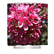 Cherry Blossoms 2019 Iv Shower Curtain