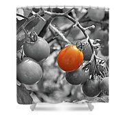 Cherry Tomatoes Partial Color Shower Curtain