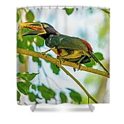 Chestnut-eared Araacari Shower Curtain