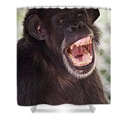 Chimp With Mouth Open Shower Curtain