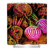 Chioggia Beets Shower Curtain