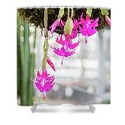 Christmas Cactus In Razzle Dazzle Pink Shower Curtain