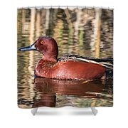 Cinnamon Teal On The Pond Shower Curtain