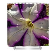 Circle Of Purple Shower Curtain