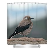 Clarks Nutcracker In The Wild Shower Curtain by Kyle Lee