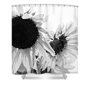 Classic Sunflowers Shower Curtain