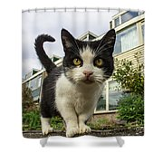 Close Up Cat On The Street Shower Curtain