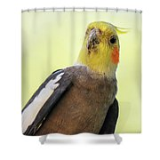 Close Up Of A Cockatiel Shower Curtain