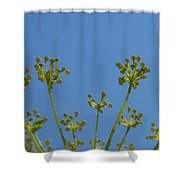 Close Up Of Fennel Flowers. On Sky Background Shower Curtain