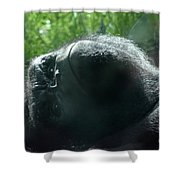 Close-up Of Frowning Adult Mountain Gorilla Shower Curtain