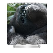 Close-up Shot Of Silverback Gorilla Making An Angry Face Shower Curtain