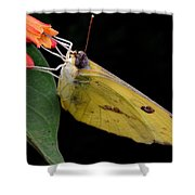 Clouded Sulfur Shower Curtain