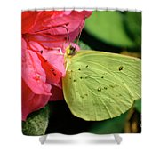 Cloudless Sulphur Shower Curtain