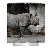 Coat Of Armor Shower Curtain