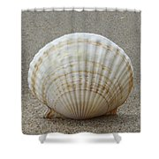 Cockle Shell 2015c Shower Curtain