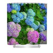 Colorful Hydrangeas Shower Curtain