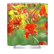 Colorful Morning Shower Curtain