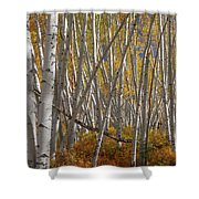 Colorful Stick Forest Shower Curtain