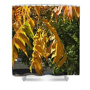 Colors Of The Neighborhood 14 Shower Curtain