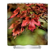 Colours Turning Shower Curtain