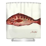 Comber Fish Shower Curtain