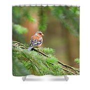 Common Chaffinch Fringilla Coelebs Shower Curtain