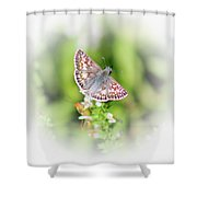 Common Checkered Skipper Butterfly  Shower Curtain
