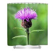 Common Knapweed 2 Shower Curtain