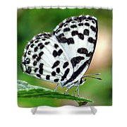 Common Pierrot Butterfly Shower Curtain