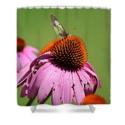 Cone Flower Butterfly At Rest Shower Curtain
