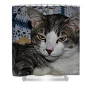Content Cat Shower Curtain