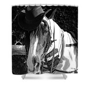 Cool Gypsy Horse Shower Curtain