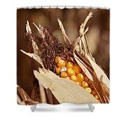 Corn In Dry Husk Shower Curtain