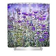 Cornflower Meadow Shower Curtain by Susan Maxwell Schmidt